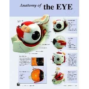 Human Eye Anatomy Charts Notebook Size Poster;Pk/10