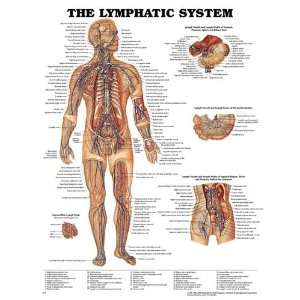 Category: Physician Supplies / Anatomy Charts): Health & Personal Care