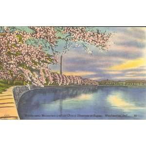 Washington Monument,cherry blossoms,sunset,Tidal Basin,postcard,DC