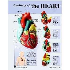 Human Heart Anatomy Charts Notebook Size Poster;Pk/10