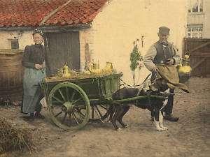 Bernese Swiss Mountain Dog Milk Cart Carting Print