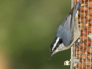 Wild Birds Unlimited  Desktop Wallpapers  Ottawa, ON