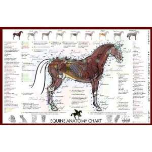 Equine Basic Anatomy Chart:  Industrial & Scientific