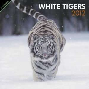 White Tigers 2012 Wall Calendar 12 X 12 Office Products