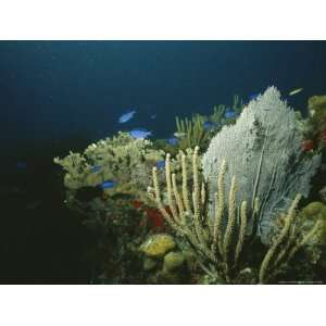 A View of an Active Reef with Corals, Fish, Sea Fans, Etc